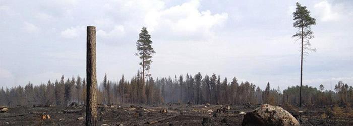 Angaende Sala-branden